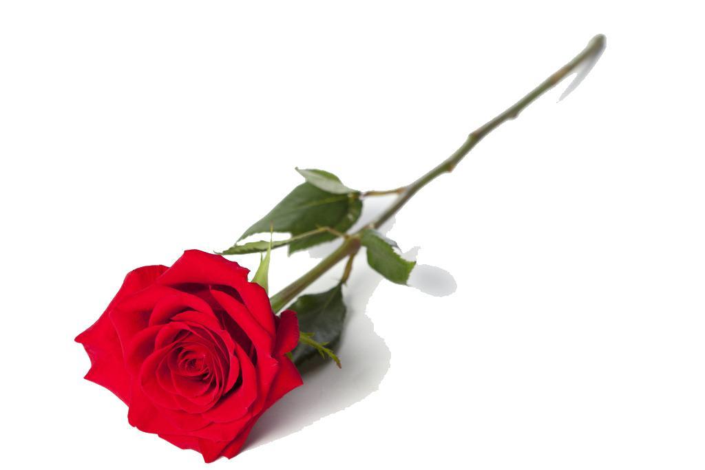 单支玫瑰psd素材